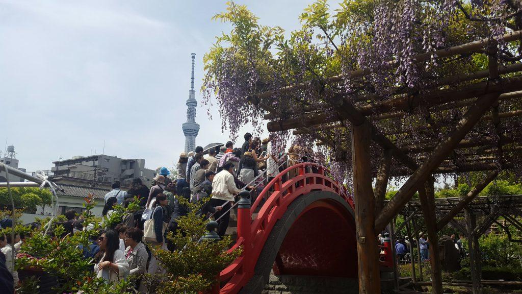 ponte rosso Sky tree tokyo Kameido Tenjin Shrine