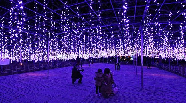 ashikaga flower park illumination glicine lights
