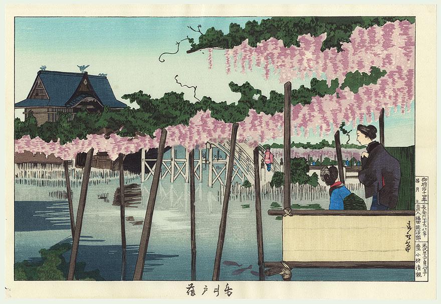 kameido wisteria glicine japan