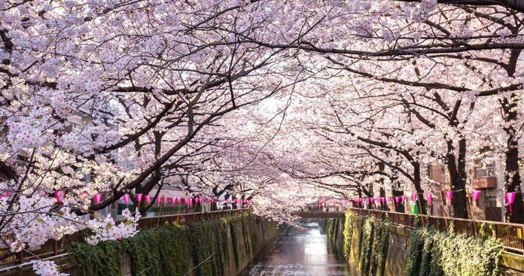Sakura wishlist – Primavera 2021